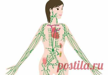Избавляемся от застоя лимфы: 3 простых упражнения Малоподвижный образ жизни отображается на фигуре, здоровье. При пассивном образе жизни наши мышцы деревенеют и как следствие защемляют НЕРВЫ И СОСУДЫ, за счет чего происходит нарушение кровотока и движение лимфы.