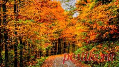 Напомни, осень, музыку ветров (стих)