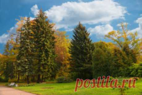 Осень — Про Питер