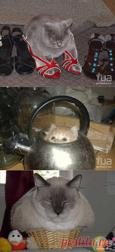 КотокАЙОбочка!!!!, кот, коты