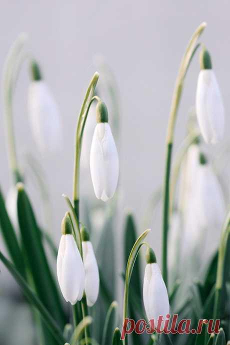Загадки о весне с ответами – 147 интересных загадок – ladyvi.ru