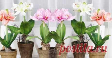 Полив комнатные растения этим средством, остается только наблюдать за чудесными изменениям…