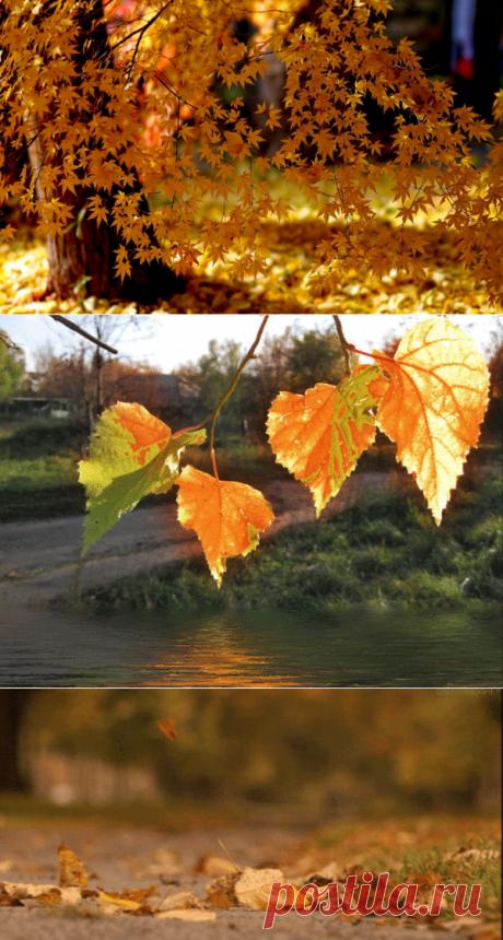Мои мечты листом кленовым кружил под вечер листопад... подборка осенних стихов и цитат...