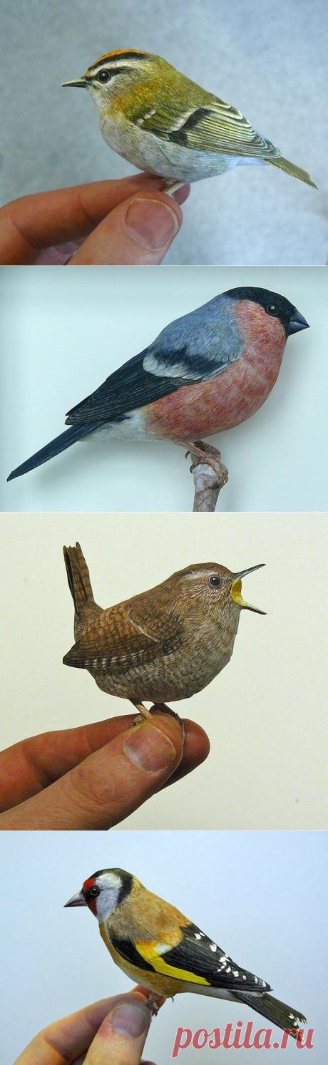 ФОТО  Бумажные реалистичные 3D птицы