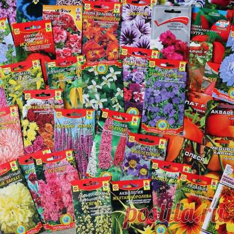 Выращивание рассады: эксперимент. Неделя 1. — FloweryVale.ru