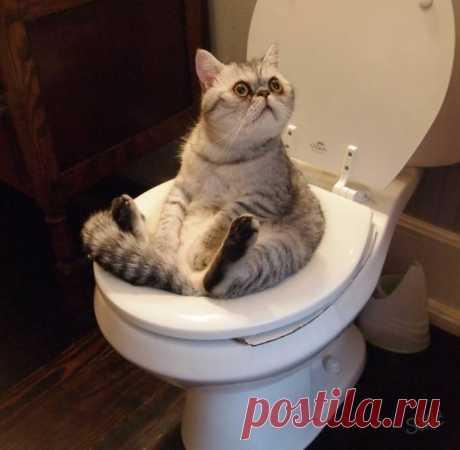 Вещи, которые нельзя делать при уходе за кошкой