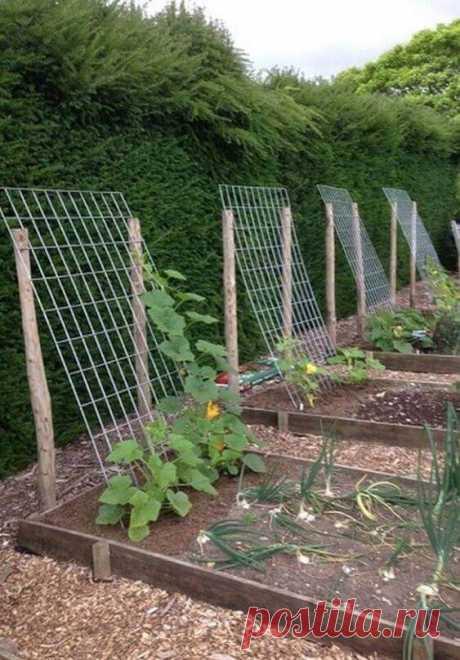 Наши Советы для начинающих садоводов / Советы по повышению садовой клумбы | Хостинг для дома