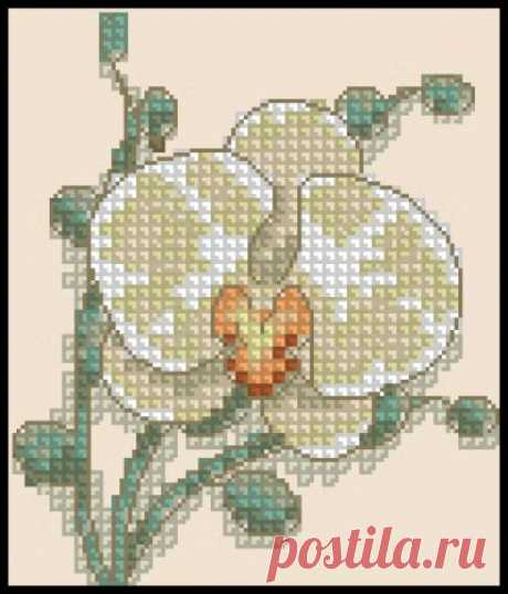 Белая орхидея- Вышивка крестом Белая орхидея