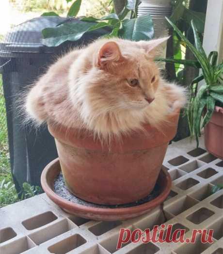 18 доказательств того, что коты — это растения! — Планета и человек