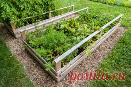 Смешанные посадки: выбираем лучших соседей для растений | О Фазенде. Загородная жизнь | Яндекс Дзен