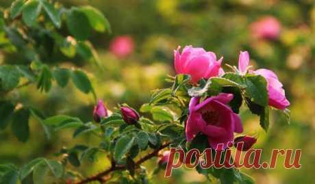 Народные приметы для посадки овощных культур   Pentad
