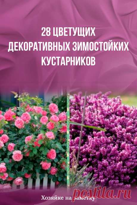 28 цветущих декоративных зимостойких кустарников