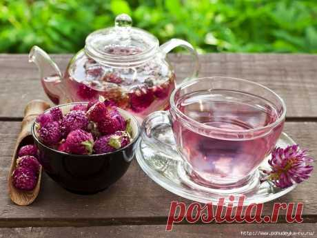 Не спешите ссориться – пейте чай из клевера!