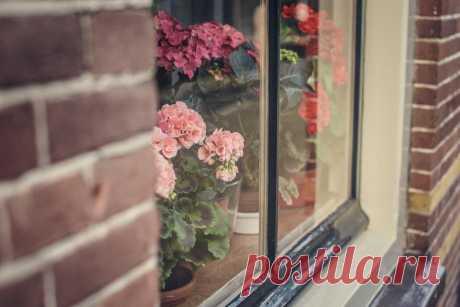 10 советов по обустройству зимнего сада в квартире Многим садоводам-огородникам, которые проводят зиму в городе, очень не хватает зелени. Почему бы не организовать сад прямо в квартире? Горшочки с красивыми и ароматными цветами поднимут настроение мор…