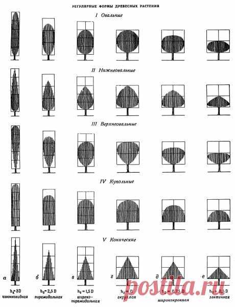 Теория и практика ландшафтного дизайна :: Композиции зеленых насаждений