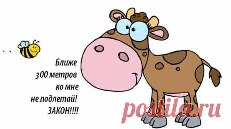 Стоп, пчелы! Ближе, чем на 300 метров, к домашним животным подлетать нельзя! на Supersadovnik.ru По новым ветеринарным правилам пчелам запретят подлетать к животным ближе, чем на 300 метров!