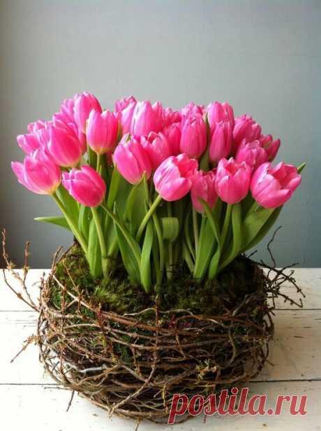 ccddd562debe19c2343aea3c84114584--pink-tulips-parrot-tulips.jpg (550×736)