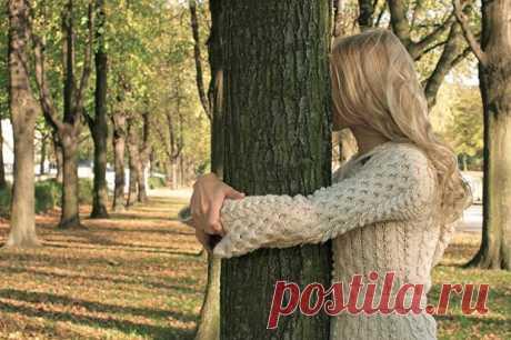 Лечение деревьями | Советы Народной Мудрости