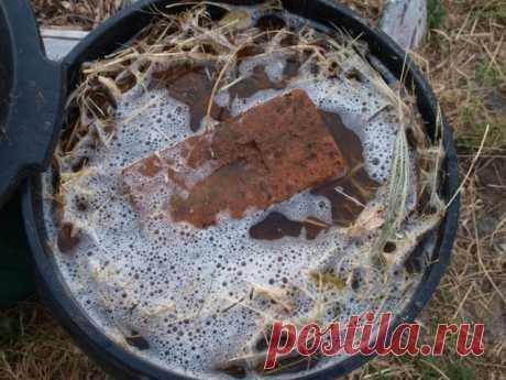 А удобрение под ногами — «сорняковая болтушка», или «травяной чай». Как сделать удобрение из травы своими руками? Фото — Ботаничка.ru