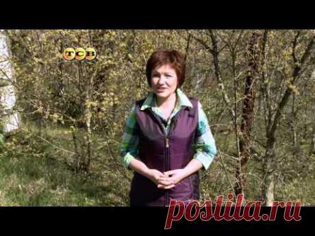 6 соток - Кизил - YouTube