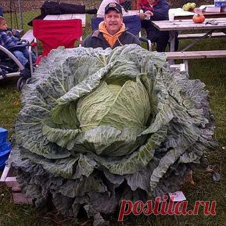 канадский урожай