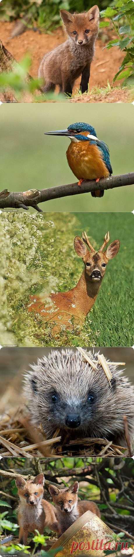 Удивительный животный мир от Адама Татлоу | ZooPicture.ru
