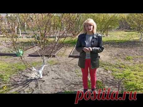 АПРЕЛЬ. Что делать в апреле на даче. Дача, сад, огород, работы на весеннем участке. Весенние работы