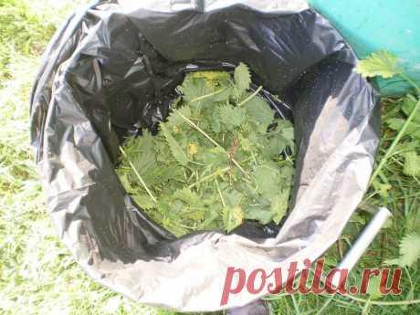 Мощное зеленое удобрение: как заготовить на весь сезон | Рекомендательная система Пульс Mail.ru
