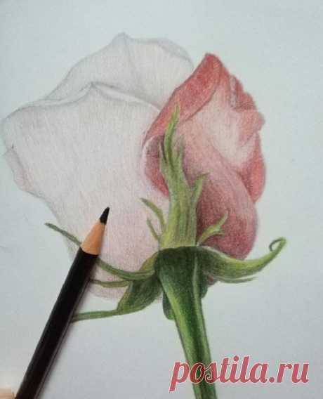 Рисуем розу карандашом: мастер-класс — Сделай сам, идеи для творчества - DIY Ideas