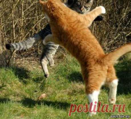 кошачьи бои... ..