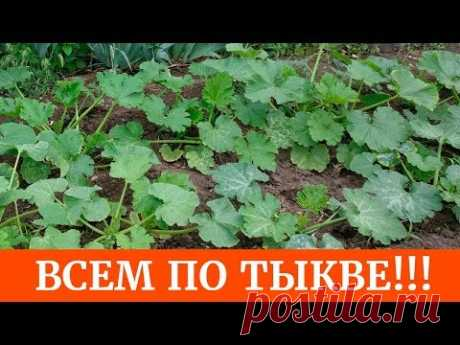 Как получить отличный урожай тыквы и кабачков