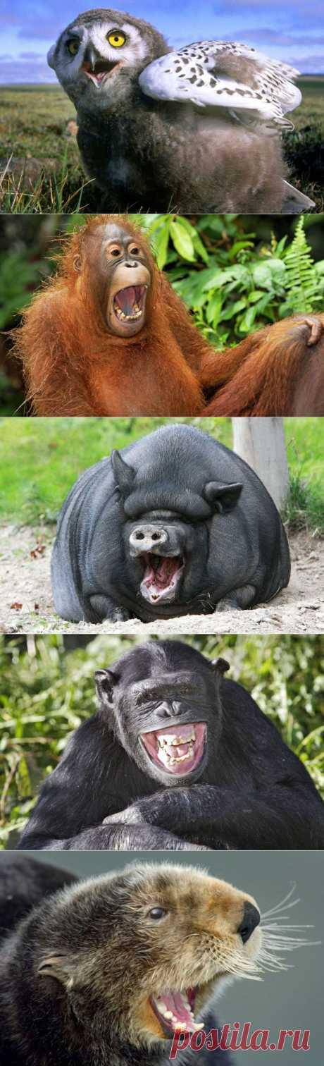 » Смеющиеся животные Это интересно!