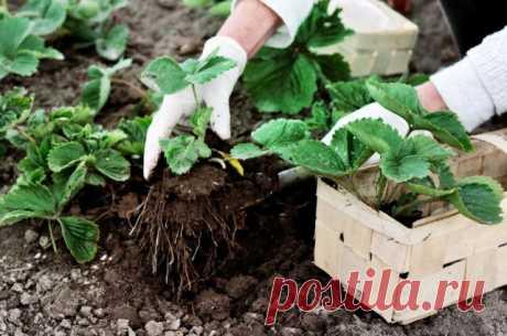 30 дел, которые надо сделать в саду, огороде и цветнике в августе   Новости (Огород.ru)