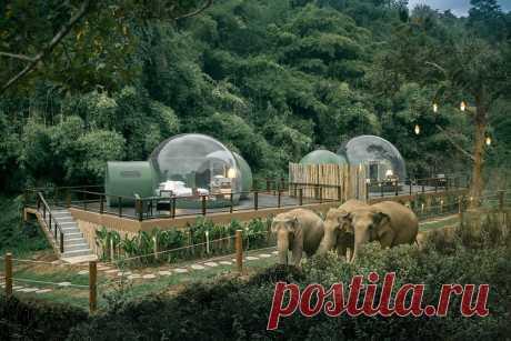 3 крутых фото прозрачного отеля посреди заповедника со слонами Есть варик поспать в лесу среди слонов.