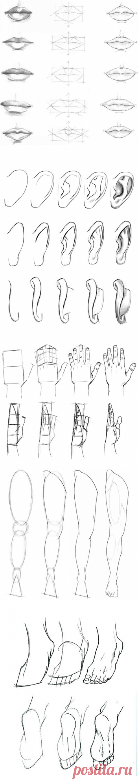 Уроки рисования: анатомия человека — Сделай сам, идеи для творчества - DIY Ideas