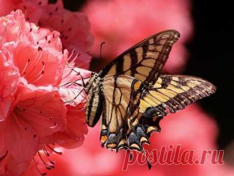 Приметы и суеверия, связанные с бабочками | Улучшаем жизнь | Яндекс Дзен