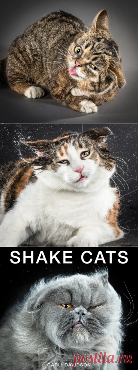 Минута позитива, или кошачьи потягушечки-потрясушечки