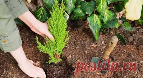Теневыносливые растения для сада   Журнал Домашний очаг