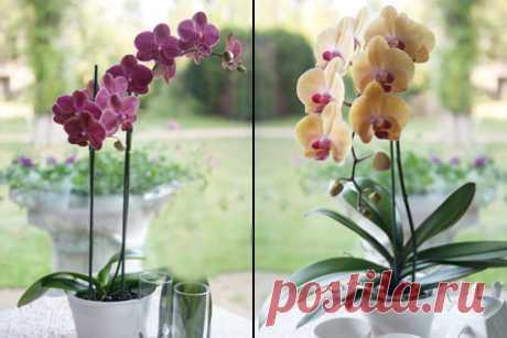Как обрезать орхидею после цветения в домашних условиях?