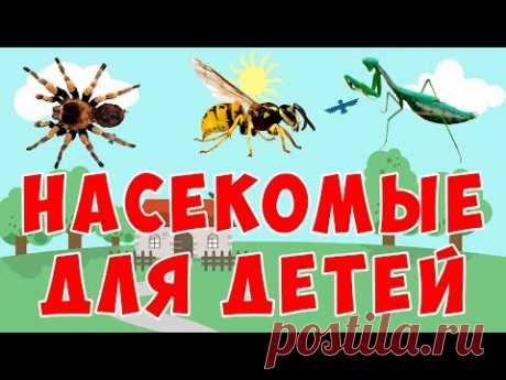 Учим насекомых   развивающий мультфильм   животные для детей - YouTube