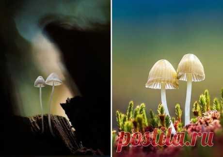 Фотографии грибов, которые погрузят вас в сказку - Путешествуем вместе