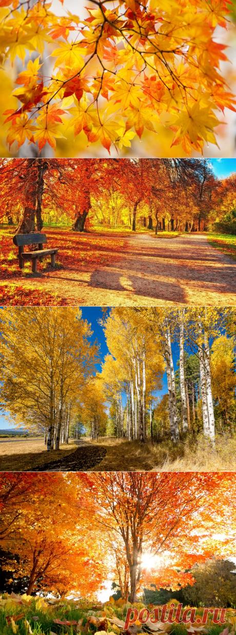 Я люблю тебя, Осень...