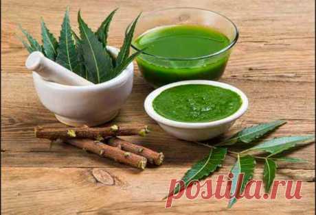 Масло и листья нима: 7 преимуществ для здоровья В индийской мифологии Ним имеет божественное происхождение. Когда божественные...