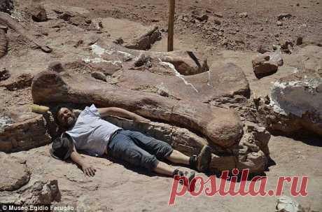 Ученые обнаружили кости самого крупного существа, когда-либо жившего на Земле / Всё самое лучшее из интернета