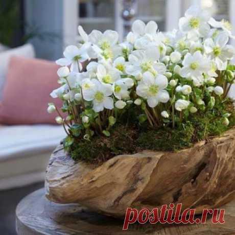 ..Люблю весенние Цветы, за что?- сама не понимаю...  Быть может, за предвестье Марта, а может – проводы Зимы....  Поставлю их в цветную Вазу, и в Дом ко мне придёт Весна... И будет веселее сразу, и станет Жизнь Надежд полна...