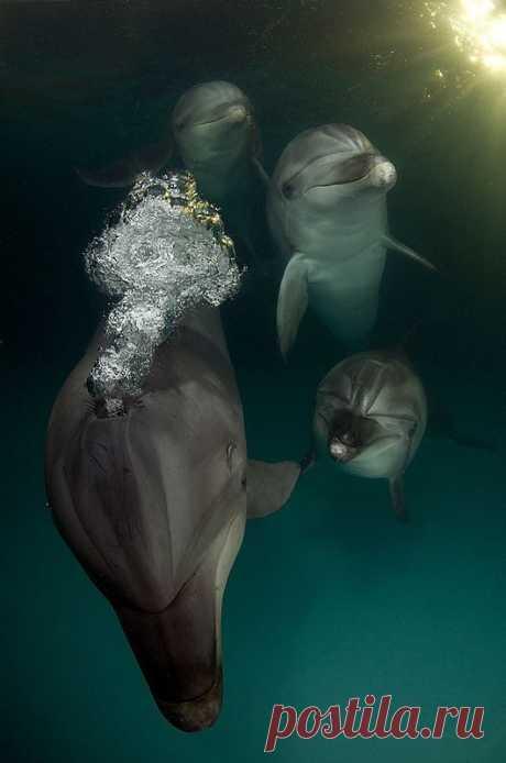 """Удивительный проект """"Быть дельфином"""" / Всё самое лучшее из интернета"""