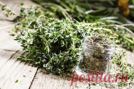 Чабрец, или тимьян ползучий: полезные свойства растения и противопоказания к применению.
