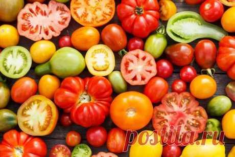 Сорта томатов: критерии и правила выбора