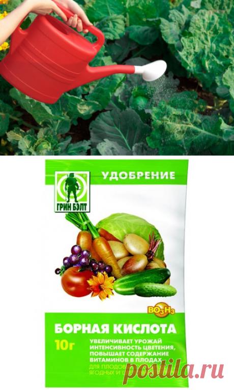 Борная кислота для капусты - польза и способы применения