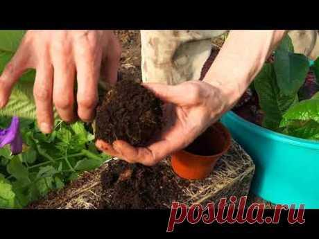 Что помидорам хорошо, то большинству комнатных растений - смерть. Или почему не растут корни.